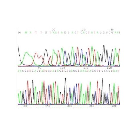 BrightDyeTerminator Cycle Sequencing kit, 100 rxn (BDT3-100)